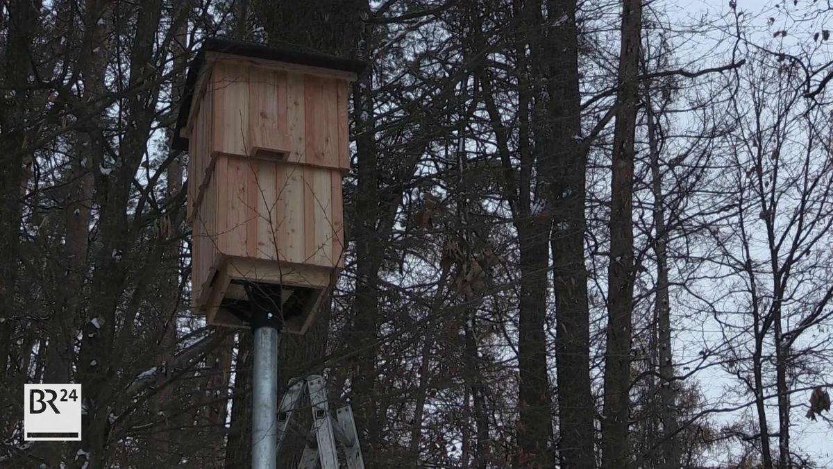 Auf einem Stahlrohr befindet sich ein Holzkasten, in dem Fledermäuse nisten können.