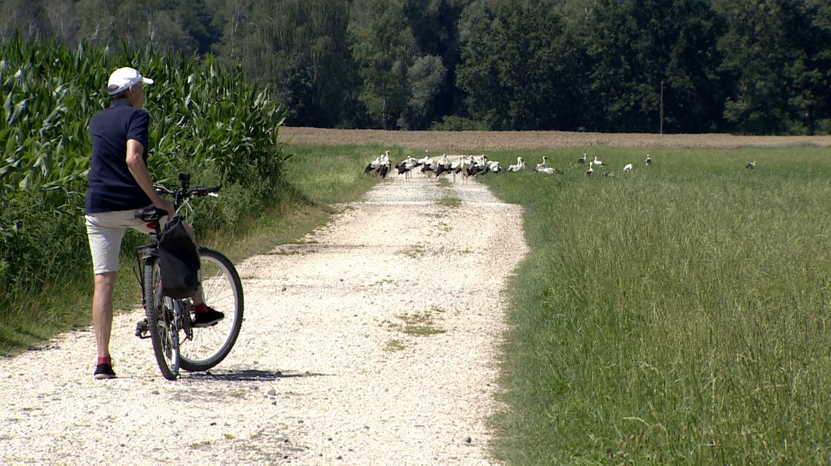 Radler und Störche auf einem Feldweg