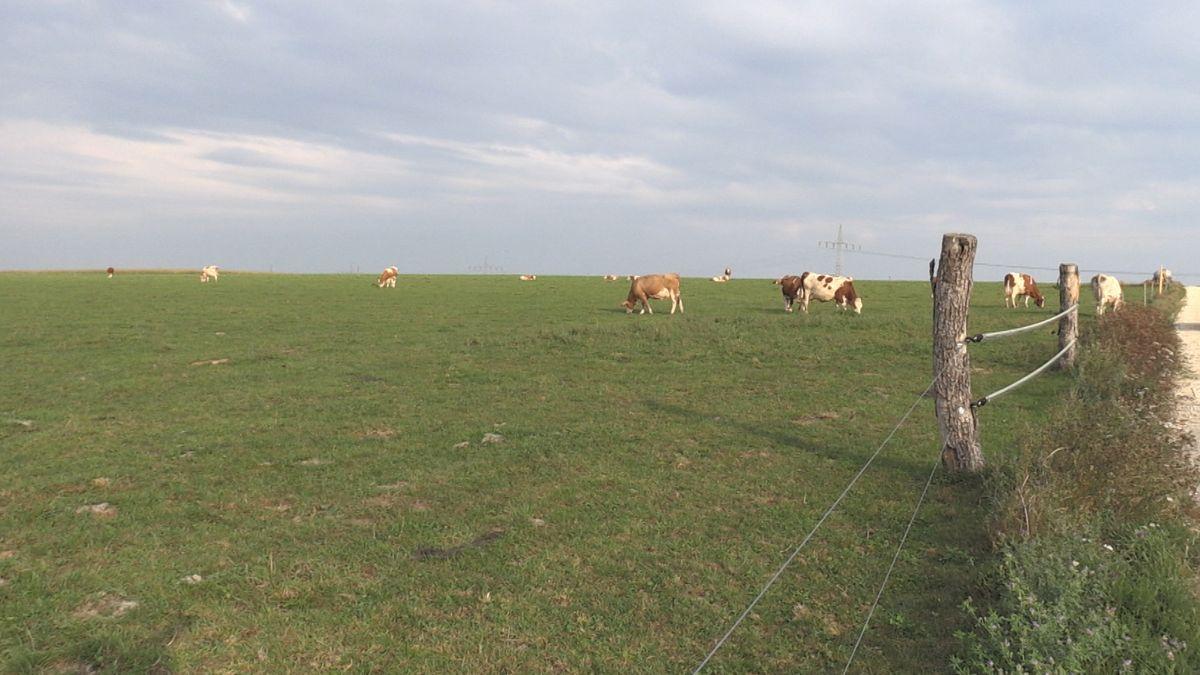 VORHER: So sah die Weide vor dem Umpflügen aus
