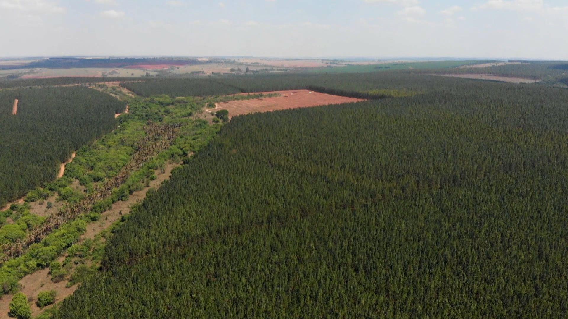 10.000 Hektar Kieferwald binden mehr CO2 als Faber-Castell weltweit verbraucht.