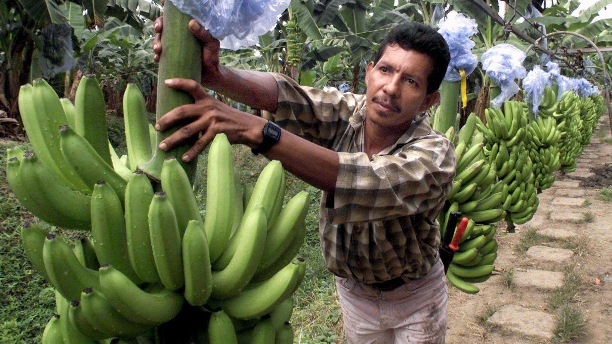 Anbau in Kolumbien
