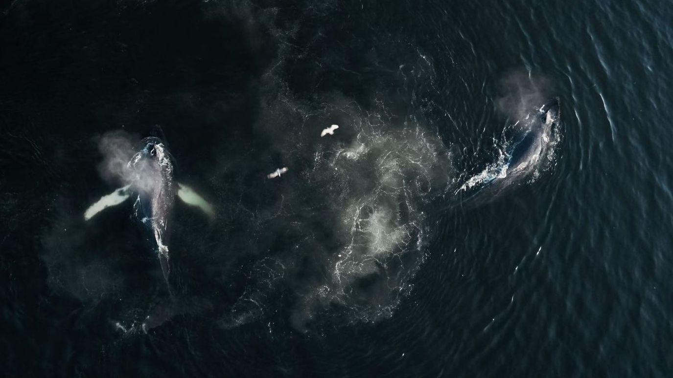 Luftaufnahme von zwei Walen im Meer