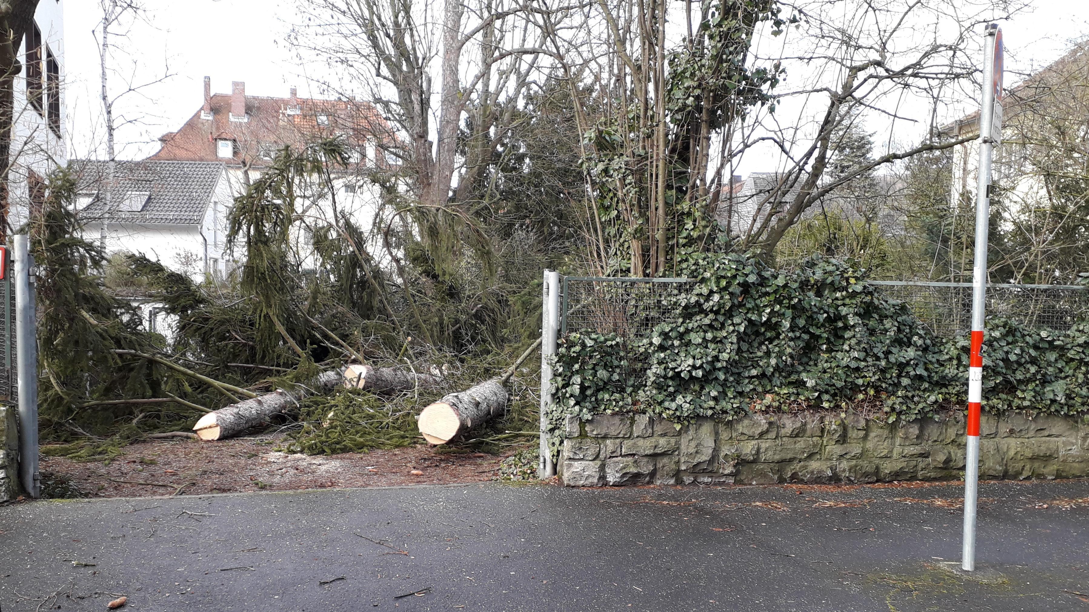 Gefällter Baum in Würzburg