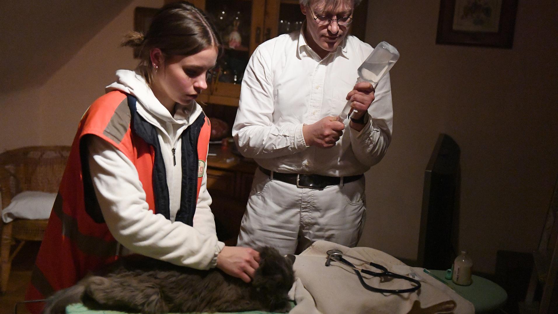 Eine Tierretterin hält eine Katze auf einem Tisch fest, während der Tierarzt eine Spritze vorbereitet.