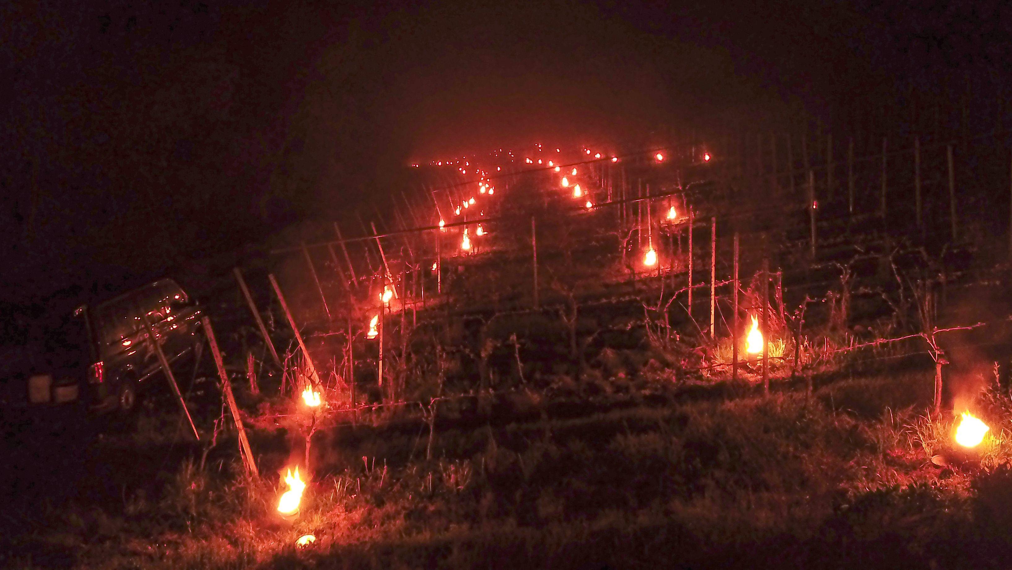 Frostnacht im Weinberg in Bimbach (Lkr. Kitzingen)