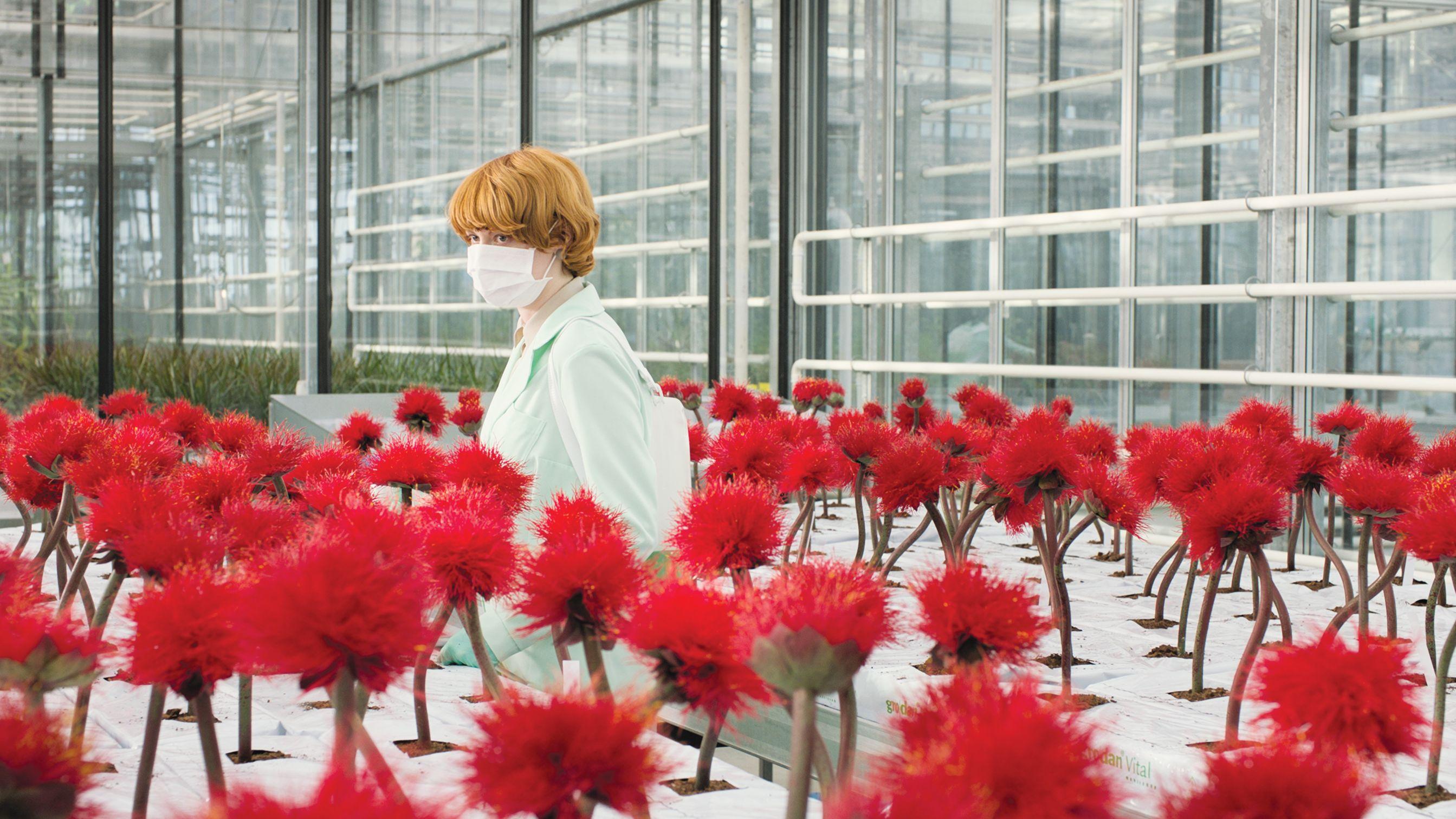 Rothaarige Wissenschaftlerin im Gewächshaus inmitten von  klatschmohnfarbenen Pflanzen.