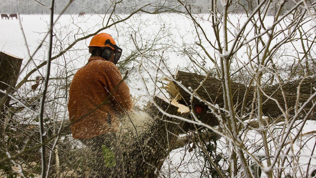 Baumfällarbeiten im Winter (Symbolbild)