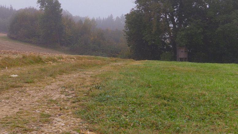 Am Samstag wurde ein elfjähriges Mädchen in Eppisburg von ihren Pflegeeltern als vermisst gemeldet.   Bild:BR