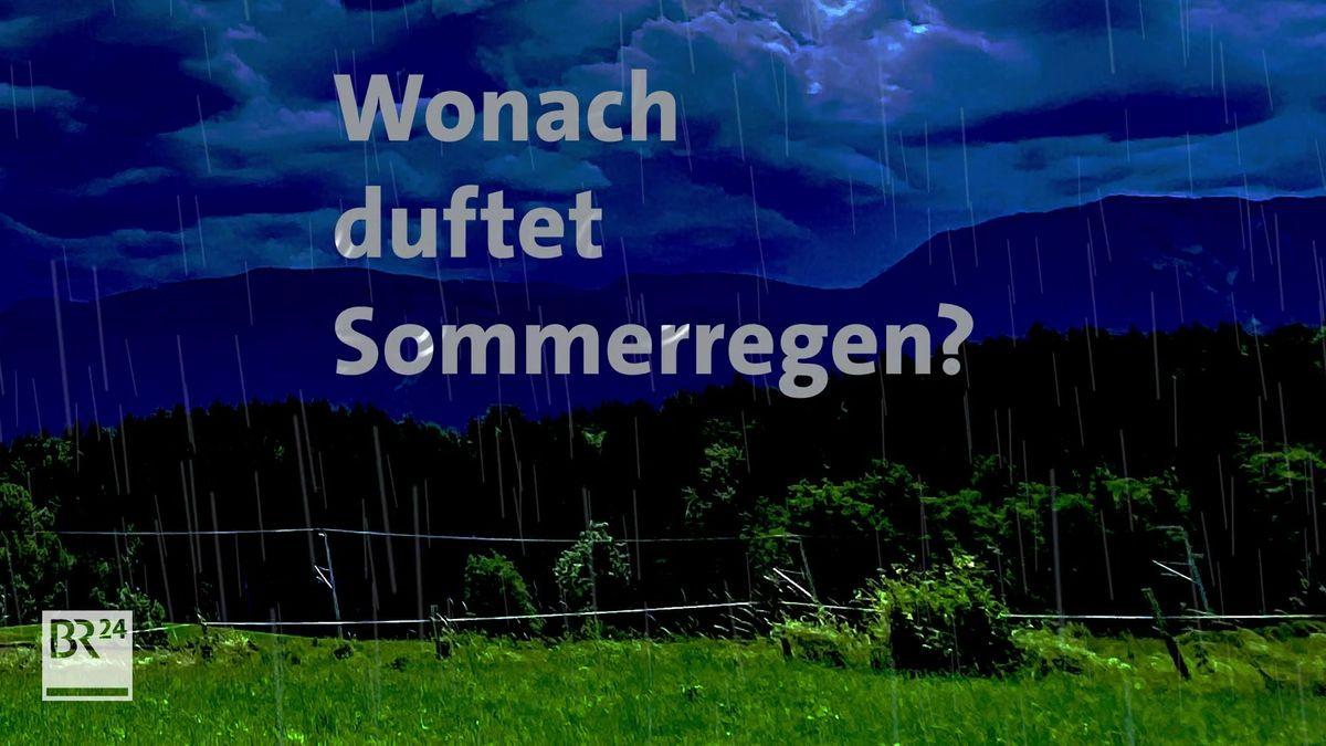 Grafik Sommerregen