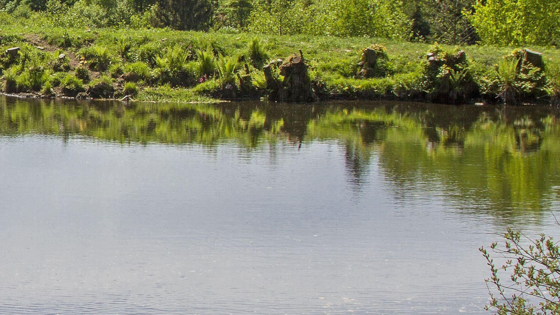 Ein See an einem Wald (Symbolbild)