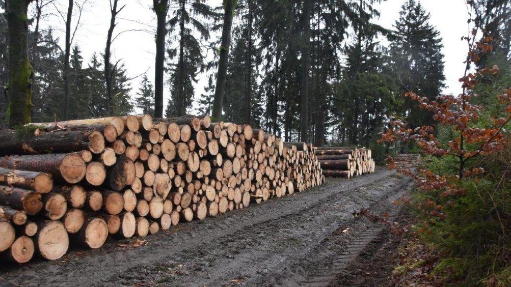 """Als """"Skandal"""" bezeichnet eine LBV-Sprecherin die derzeitigen Baumfällarbeiten am Großen Kornberg."""