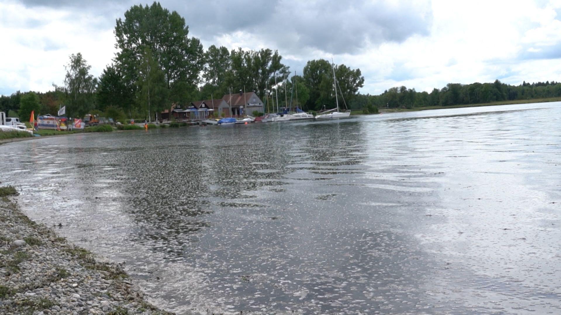 Ufer am Mandichosee