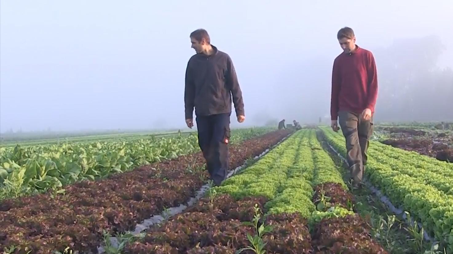 Johannes und Florian Pfänder laufen über ein Salatfeld.