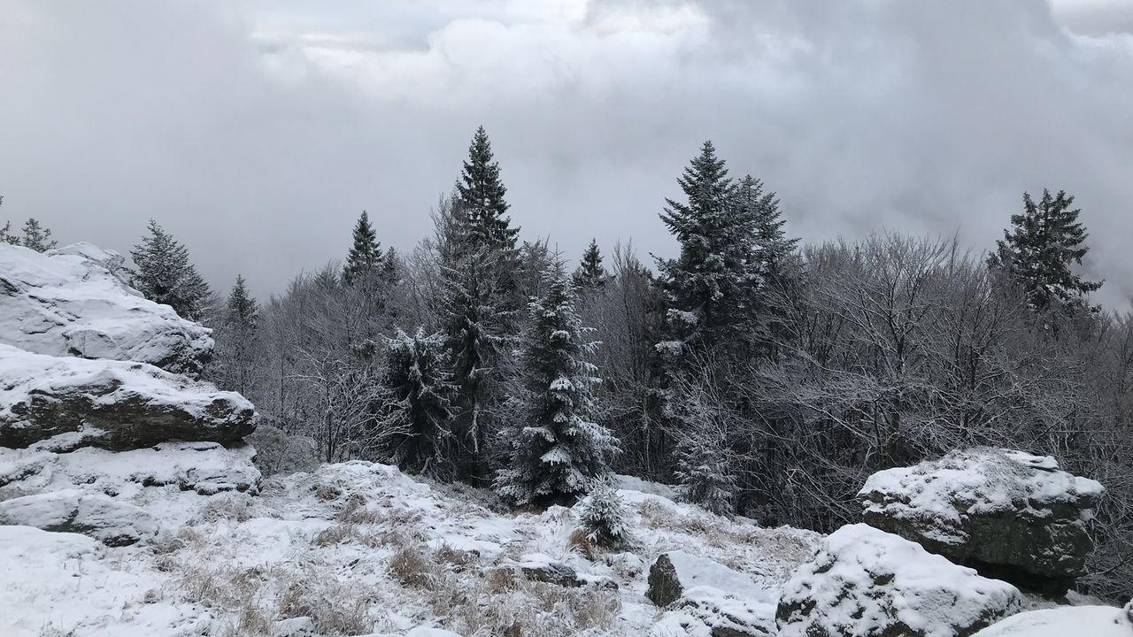 Winter im Bayerischen Wald - Winter im Zellertal: Auf dem Mühlriegel, einem von zwölf Tausendern im Zellertal.