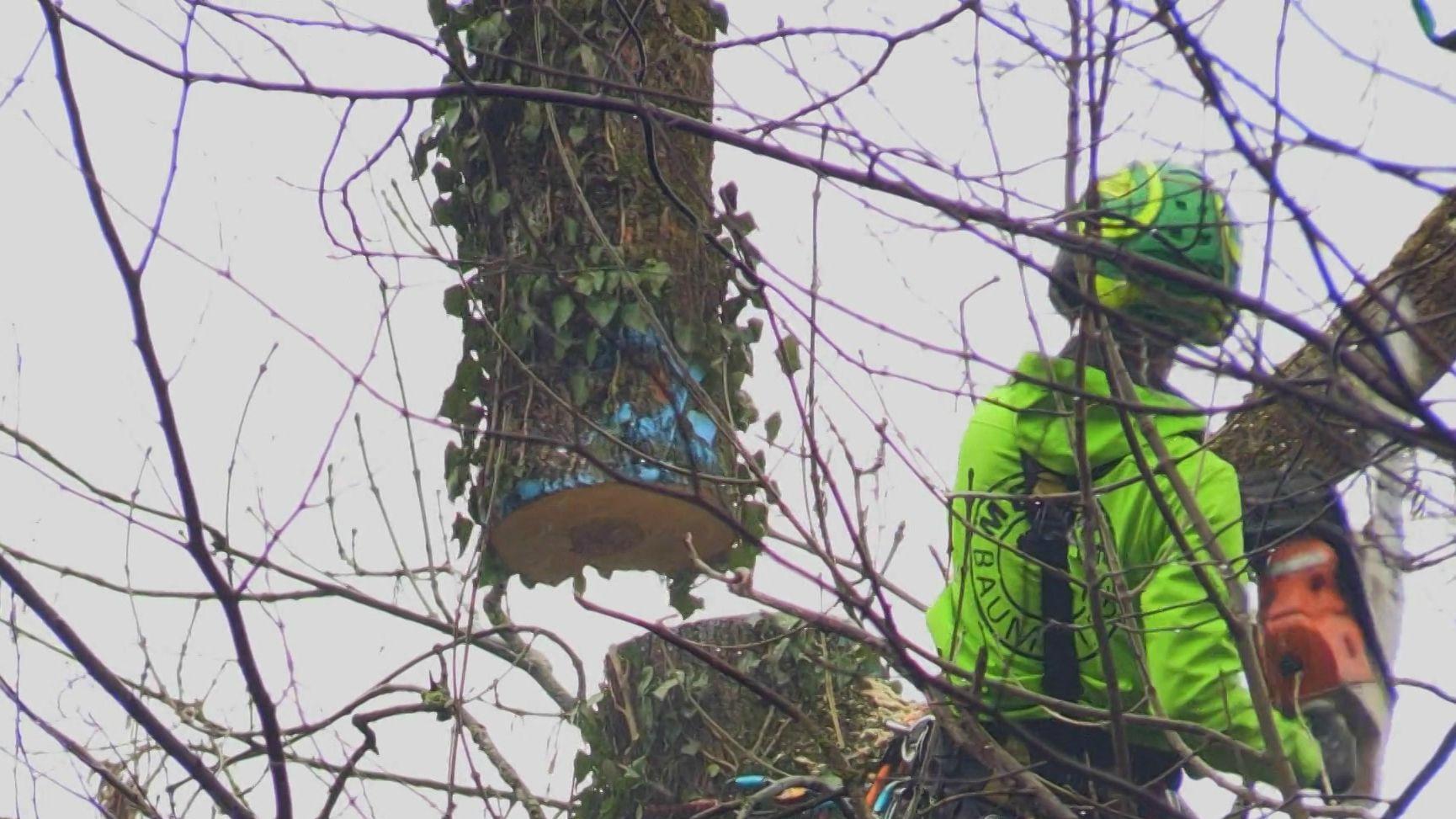 Naturschützer kritisieren Baumfällungen in Kempten