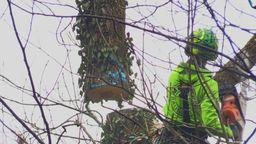 Naturschützer kritisieren Baumfällungen in Kempten | Bild:BR/Brutscher