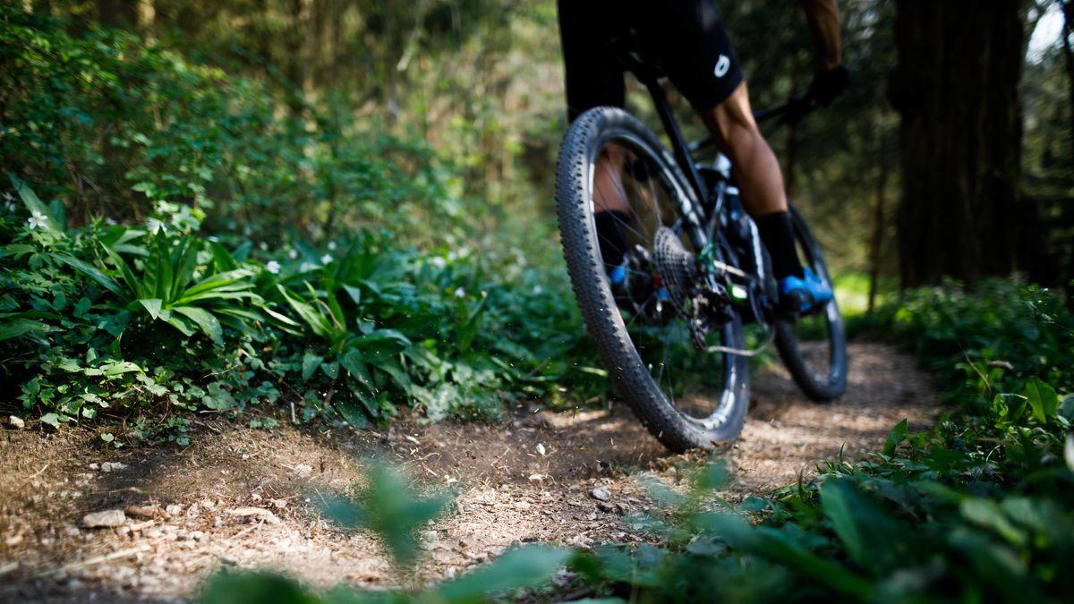 Mountainbiker im Wald (Symbolfoto)