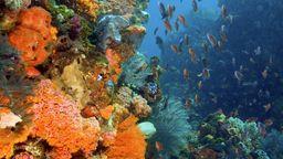 Korallenriff in Indonesien mit bunter Artenvielfalt. | Bild:picture alliance / blickwinkel/imagesandstories