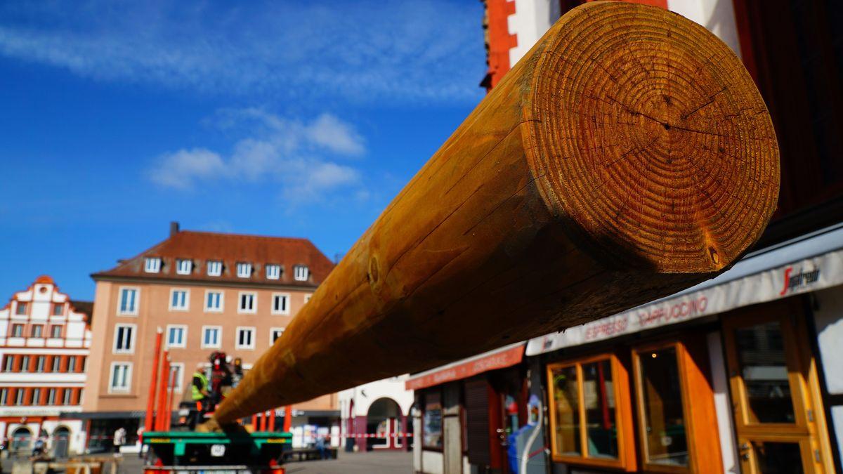 Neuer Maibaum für Würzburg