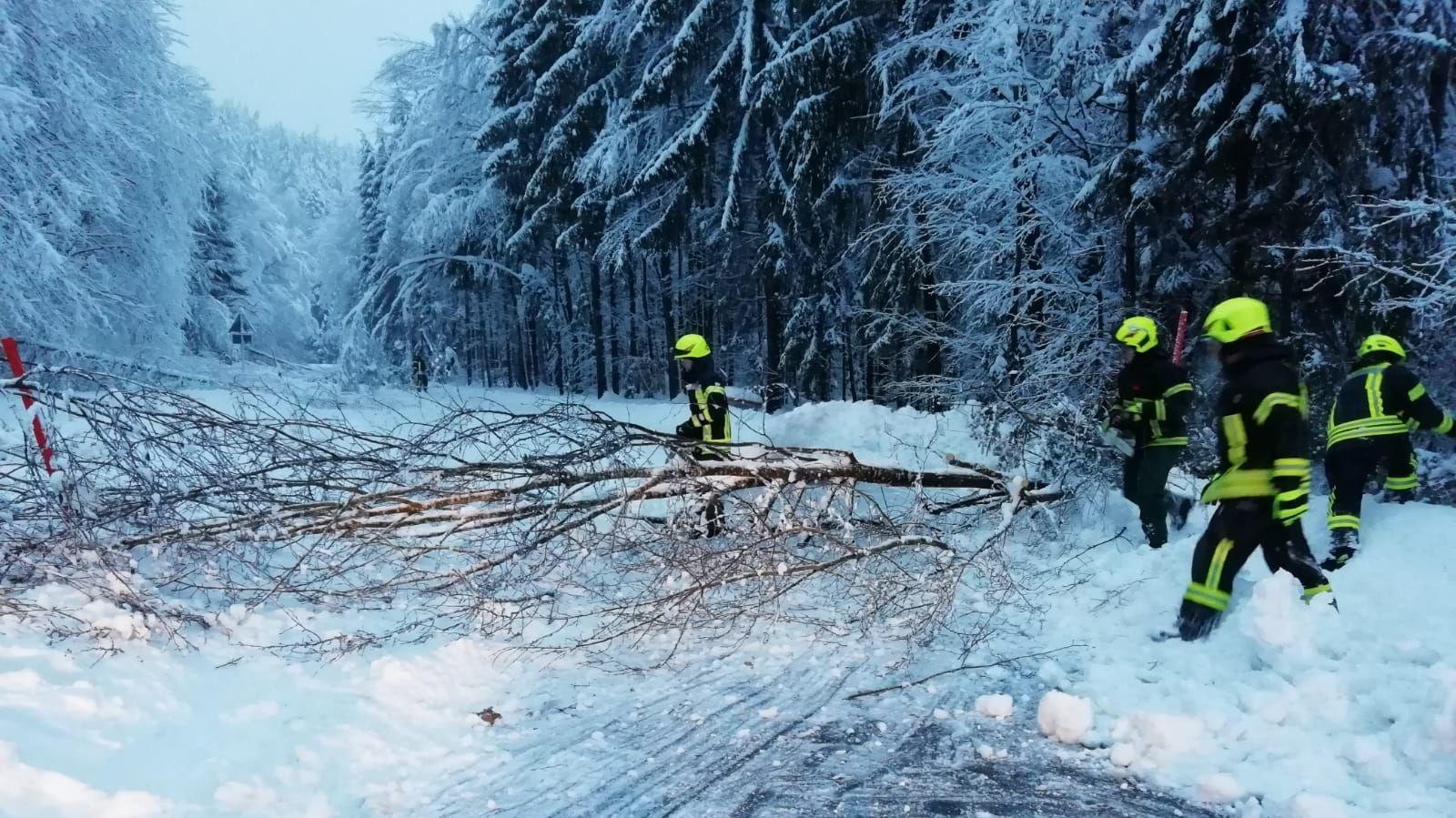 Die Feuerwehren im Landkreis Deggendorf müssen umgeknickte Bäume von den Straßen entfernen.