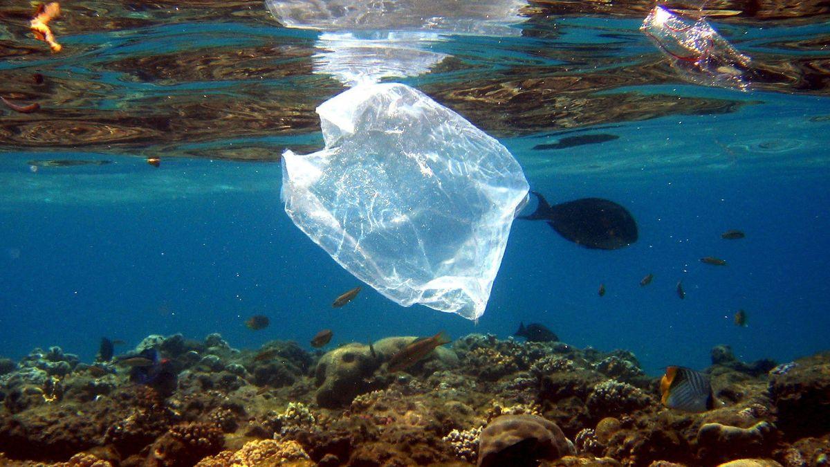 Eine Plastiktüte schwimmt über Korallen im Roten Meer in Ägypten.
