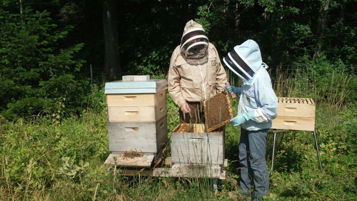 Bienenstock in Schwaben