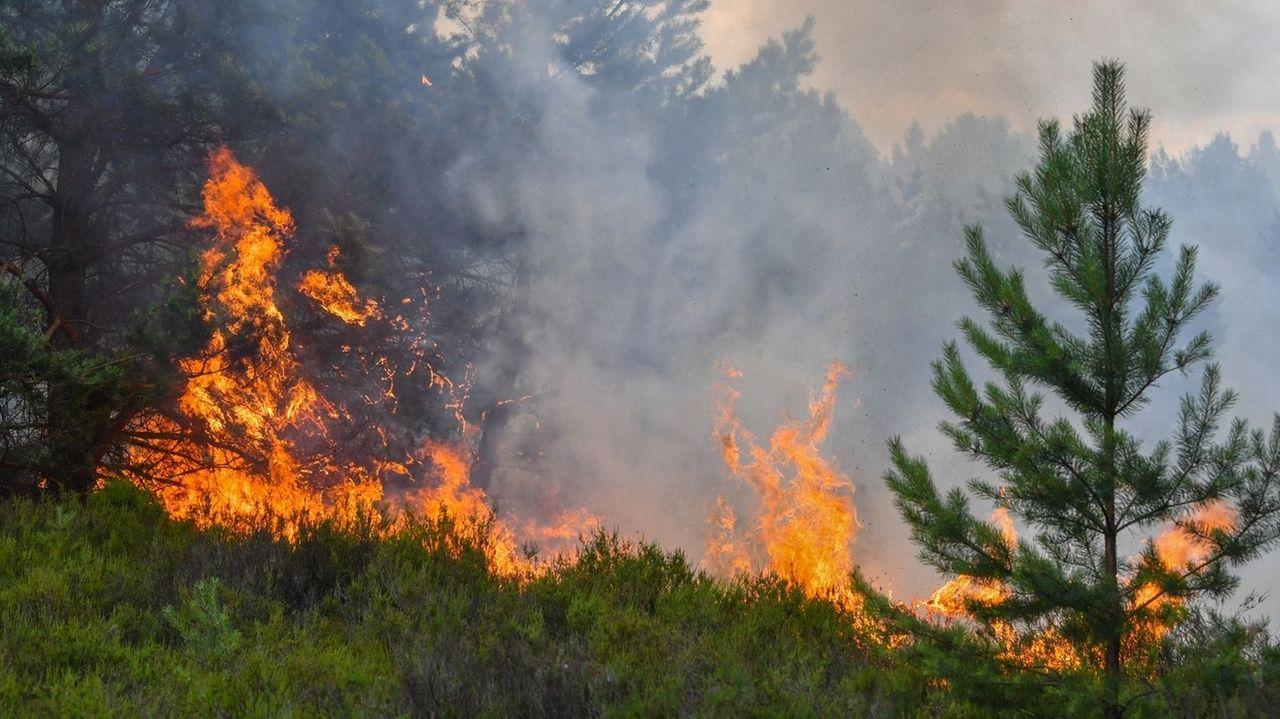 Erhöhte Waldbrandgefahr in Mittel- und Oberfranken