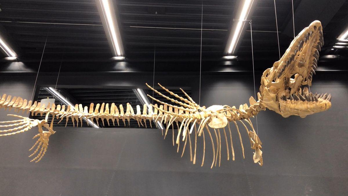 Neue Ausstellung im Lokschuppen Rosenheim über Dinosaurier.