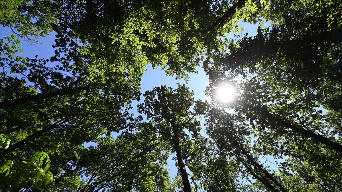 Symbolfoto Wald