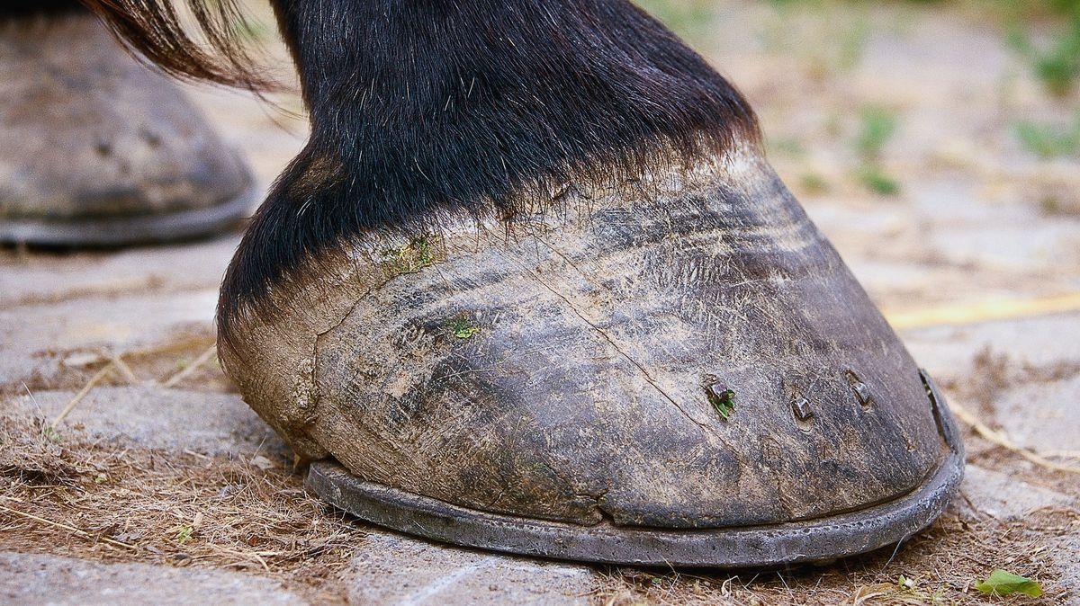Symbolfoto Pferdehuf