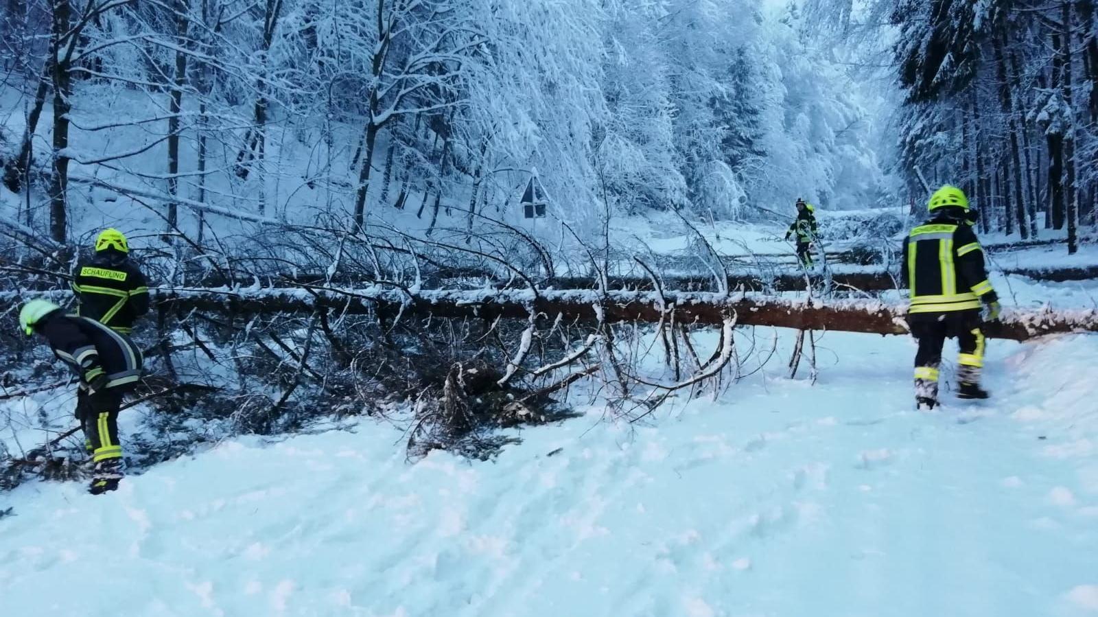 Das größte Problem im Landkreis Deggendorf: Schneebruch. Unter den Schneemassen brechen die Bäume zusammen.