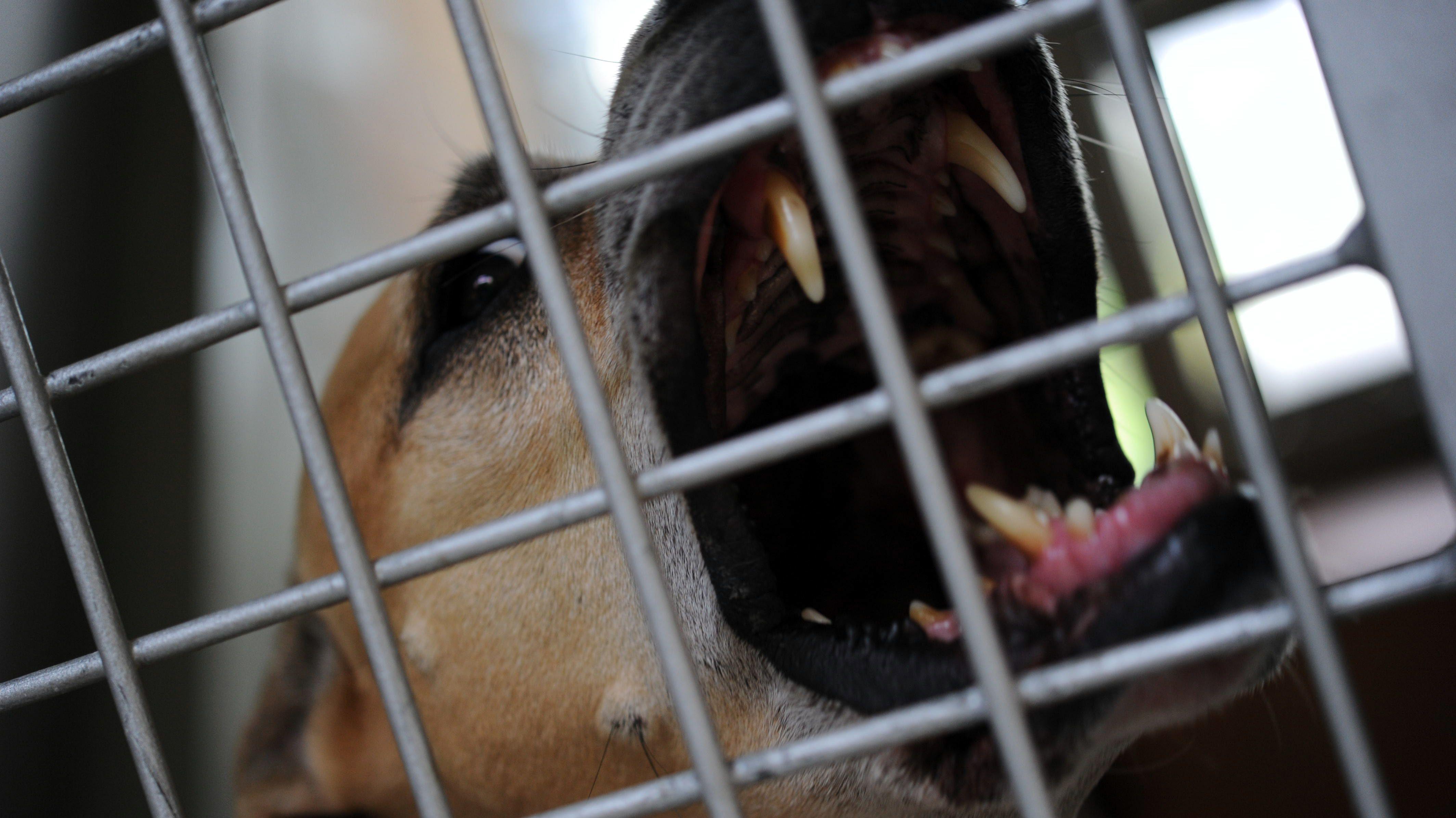 Symbolbild: Hund mit gefletschten Zähnen