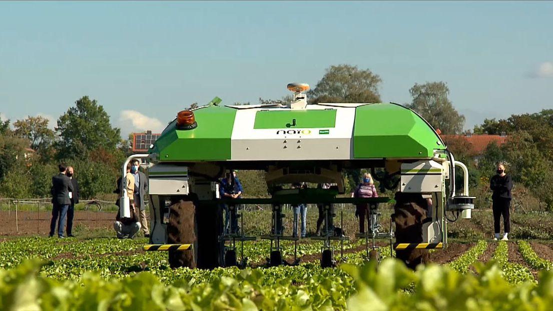 Ein grün-weißer Roboter fährt fahrerlos über ein Salatfeld.