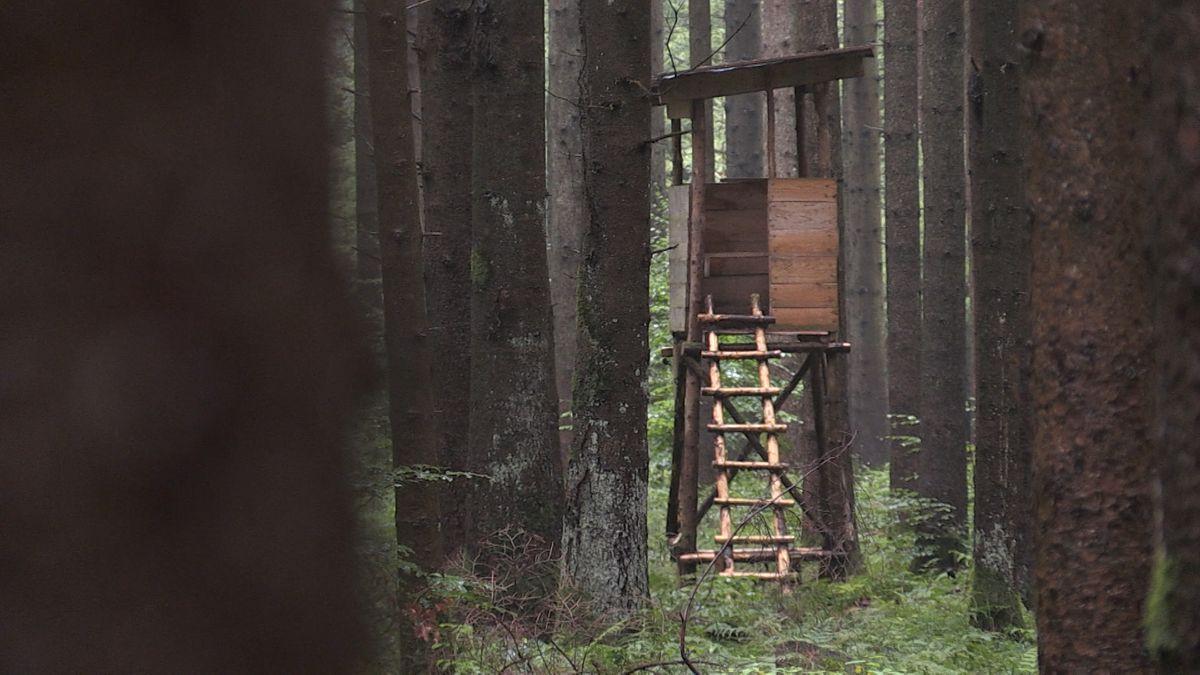 Hochsitz in einem Wald