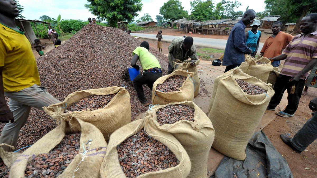 Kakaoernte in der Elfenbeinküste