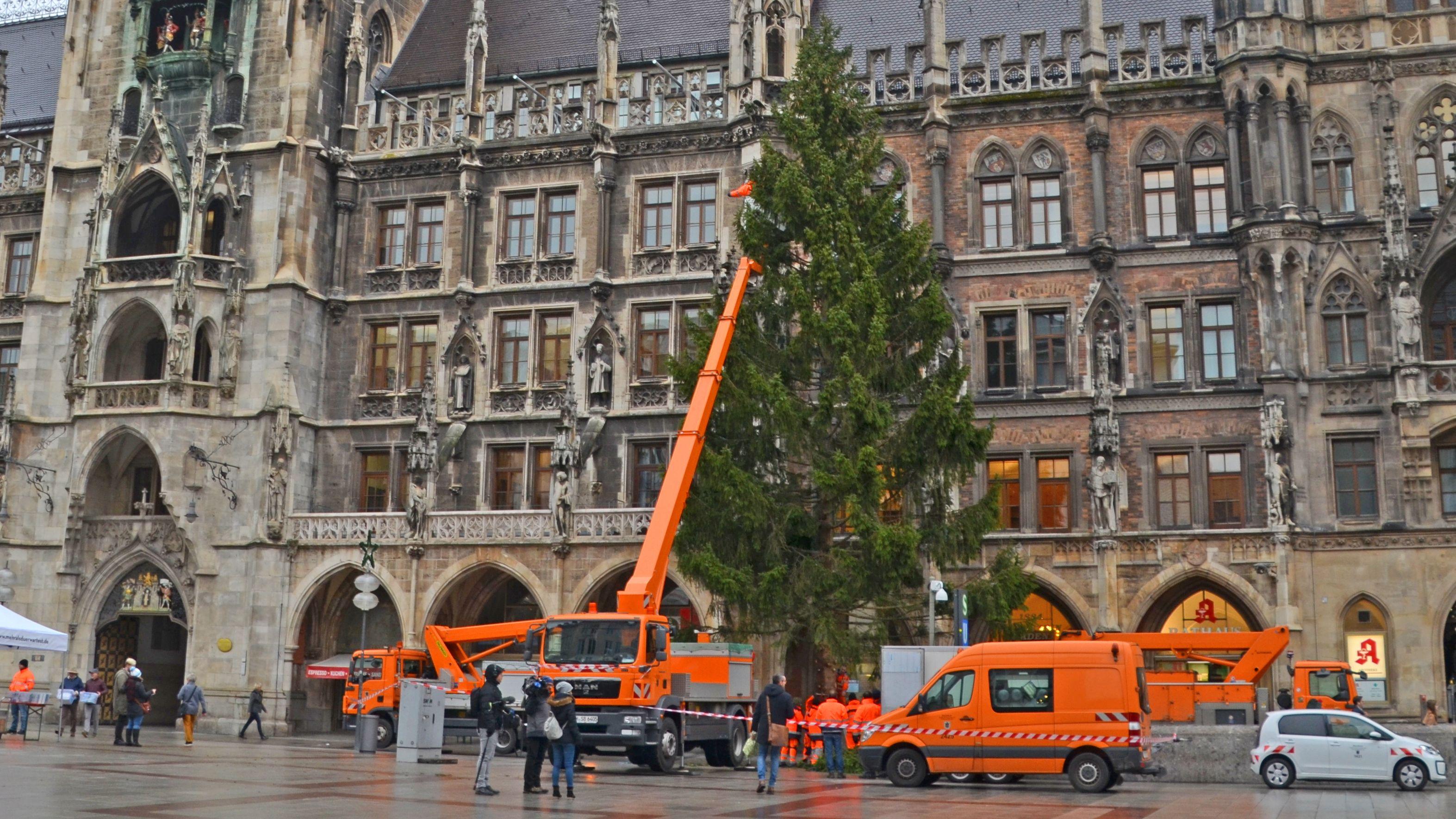 Vor dem Münchner Rathaus wird der Christbaum aufgestellt.