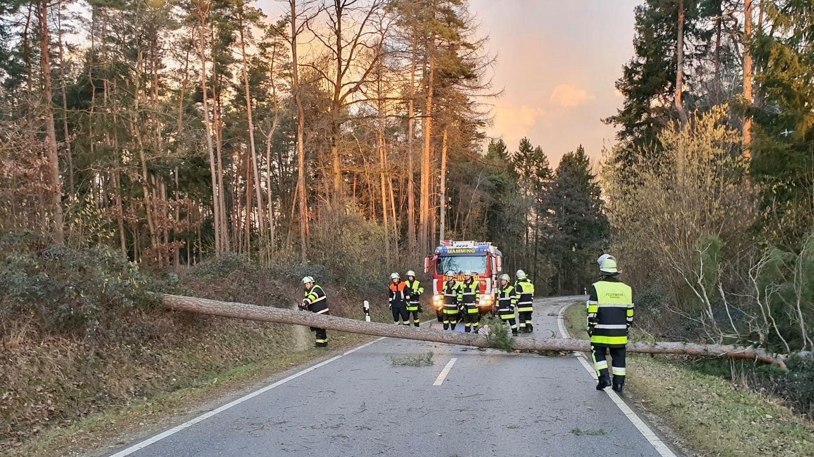 Die Freiwillige Feuerwehr zersägt einen umgestürzten Baum bei Mamming (Niederbayern).