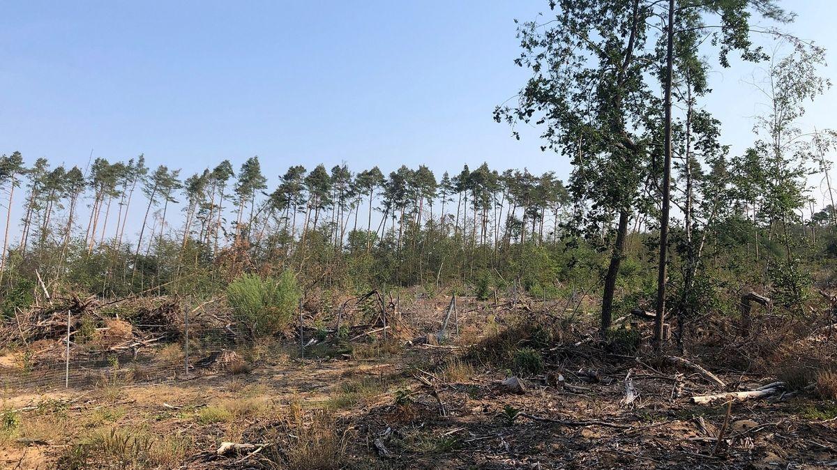 Trockenes Waldstück bei Kalstein