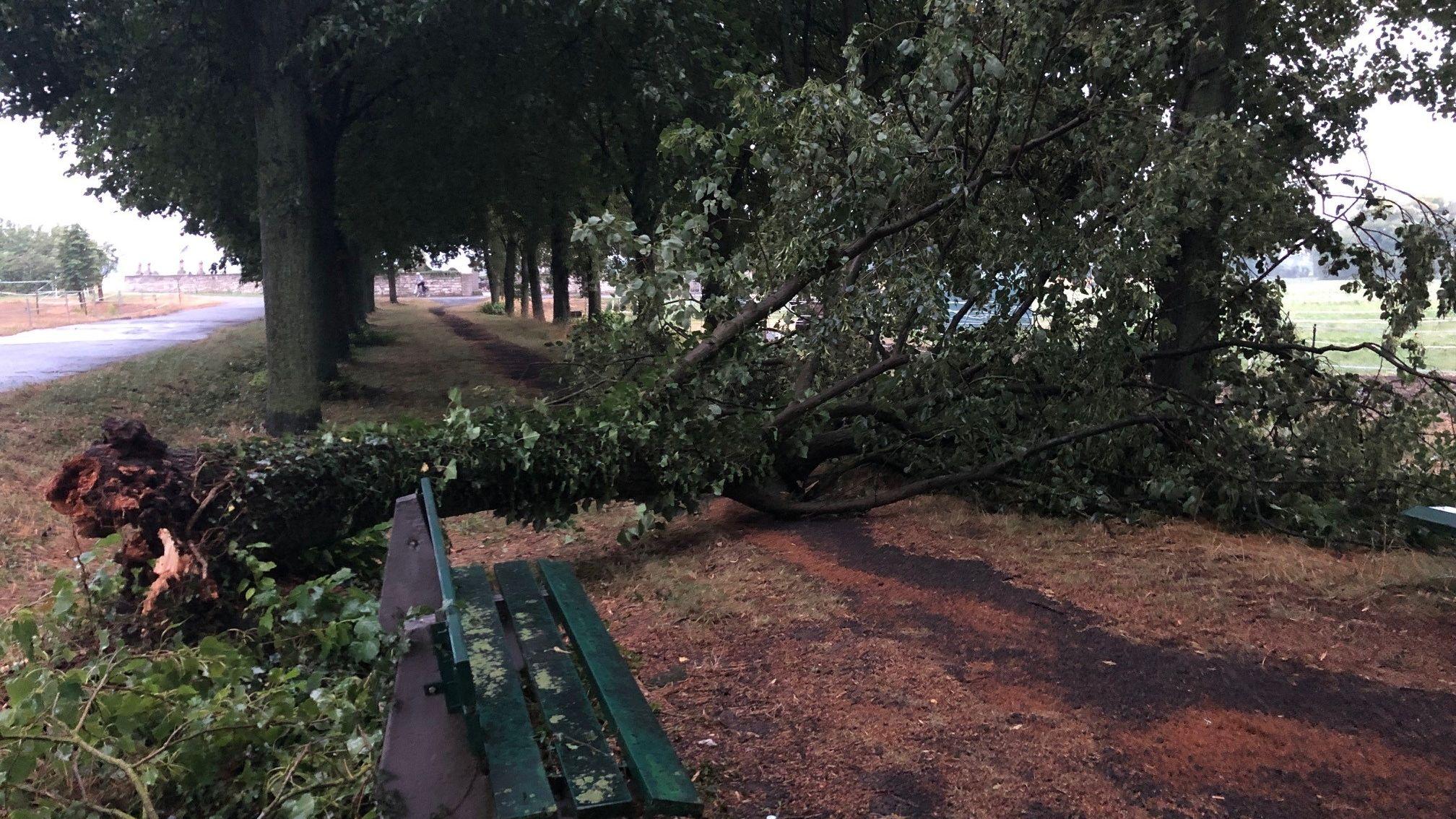 Umgefallener Baum an einem Fußgängerweg in Sulzheim (Lkr. Schweinfurt)