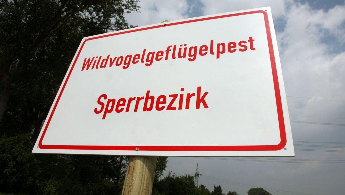 """""""Wildvogelgeflügelpest Sperrbezirk"""" steht auf einem Schild (Symbolbild)."""