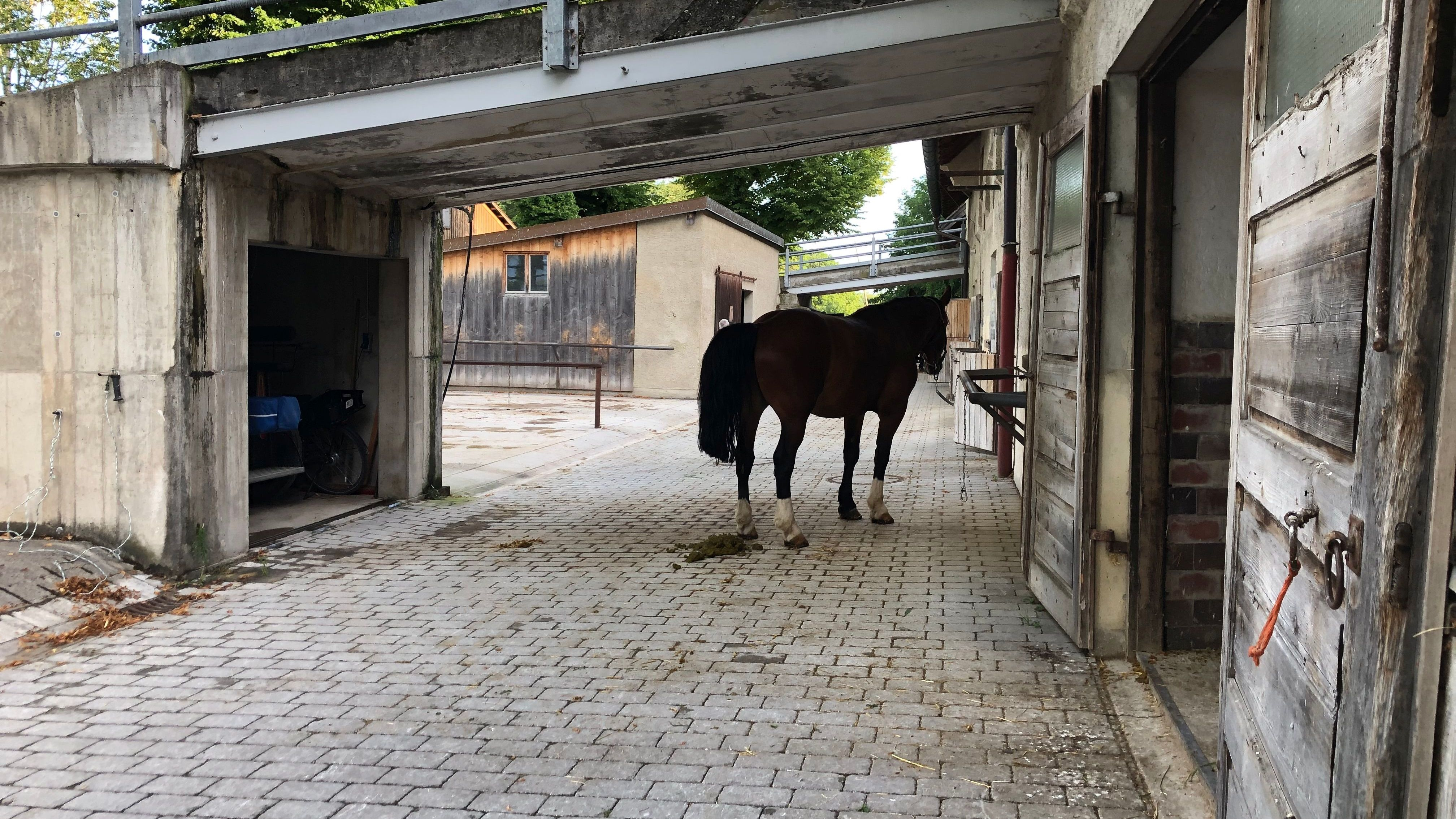 Pferd steht am Stall auf Herrenchiemsee.