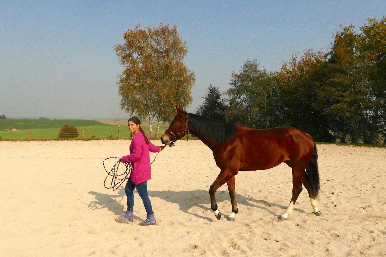 Anna Und Die Haustiere Spezial Anna Lernt Reiten Mit Pferden