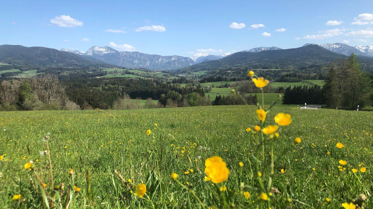 Auf der Bergwiese am Hochberg sieht man in der Entferndung die Chiemgauer Alpen.