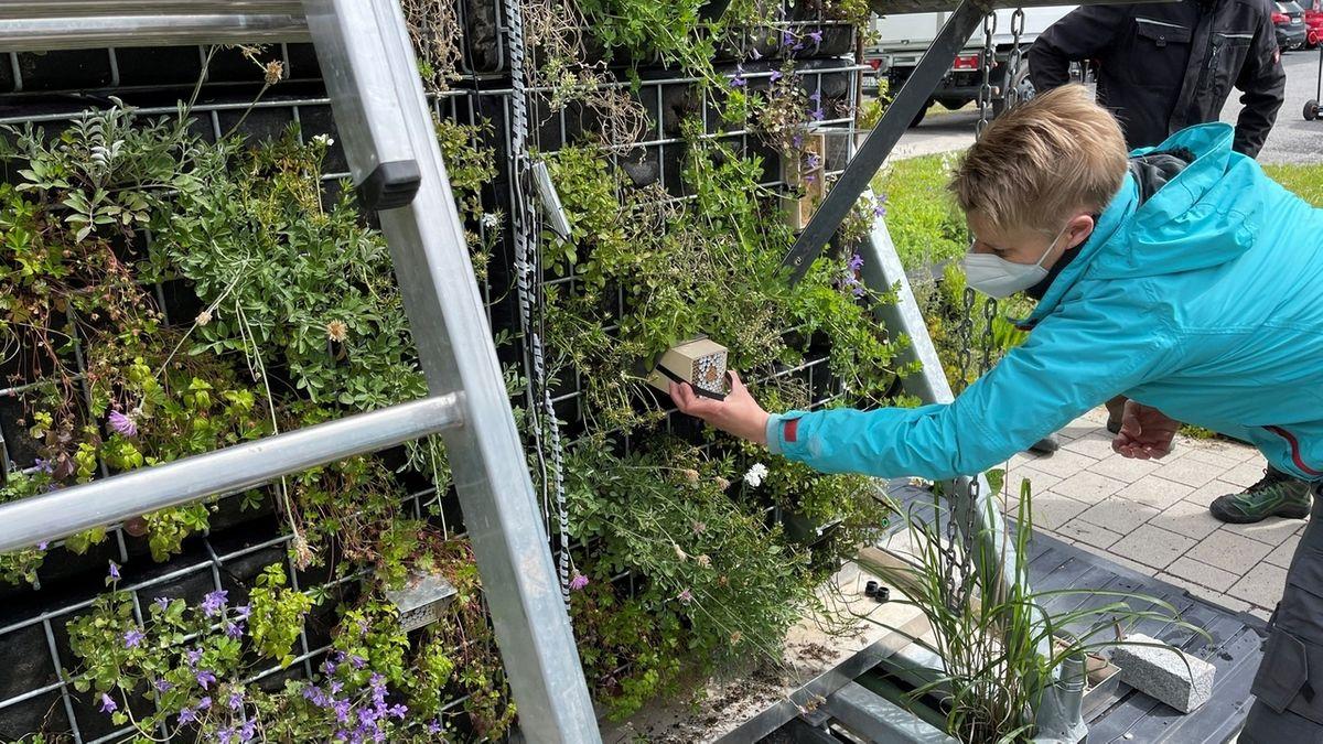 Insektenschutz durch grüne Fassaden