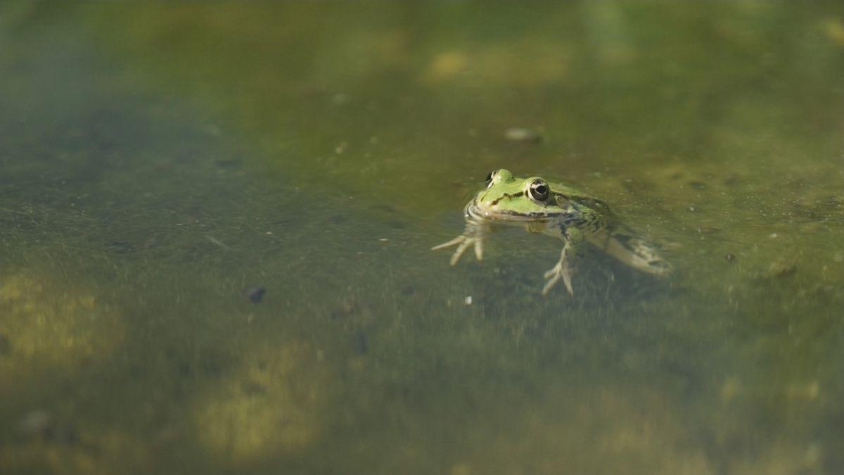 Lebensraum Isar-Mündung. Allein 192 Arten von Insekten und Weichtieren leben hier.