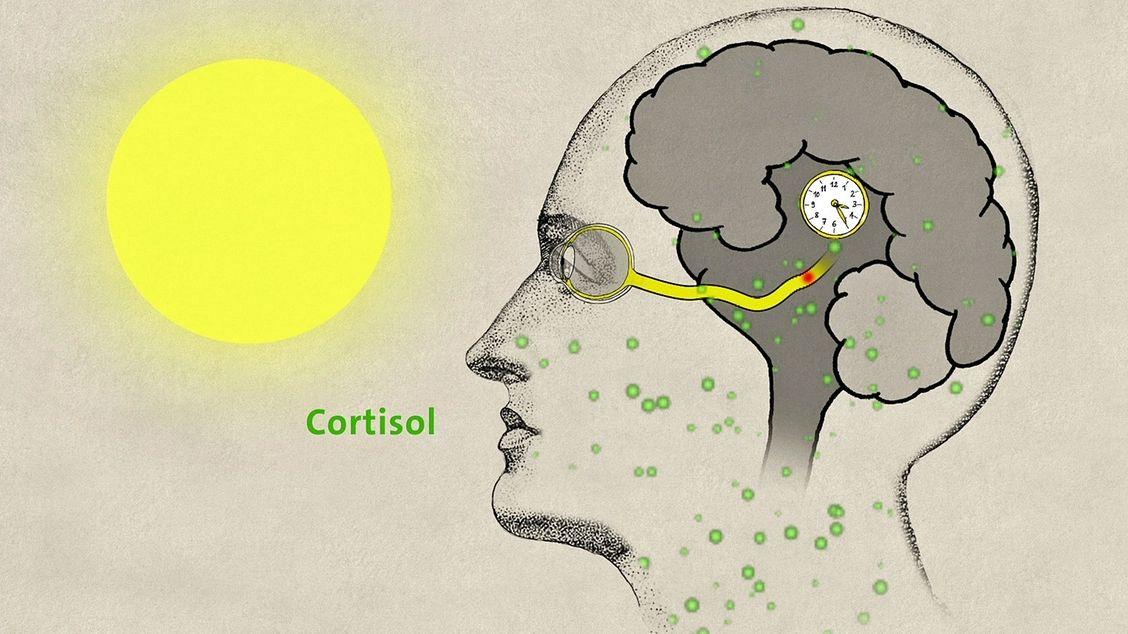 Wie natürliches Licht auf den Körper wirkt.