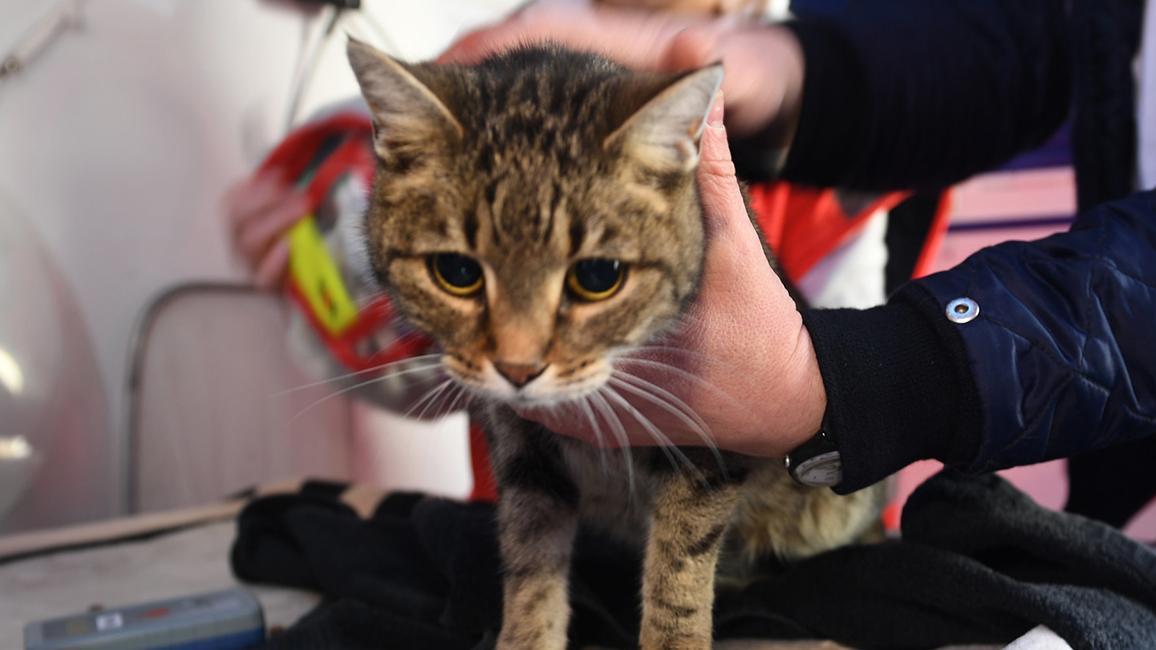 Ein Tierarzt hält eine Katze fest und will sie untersuchen.