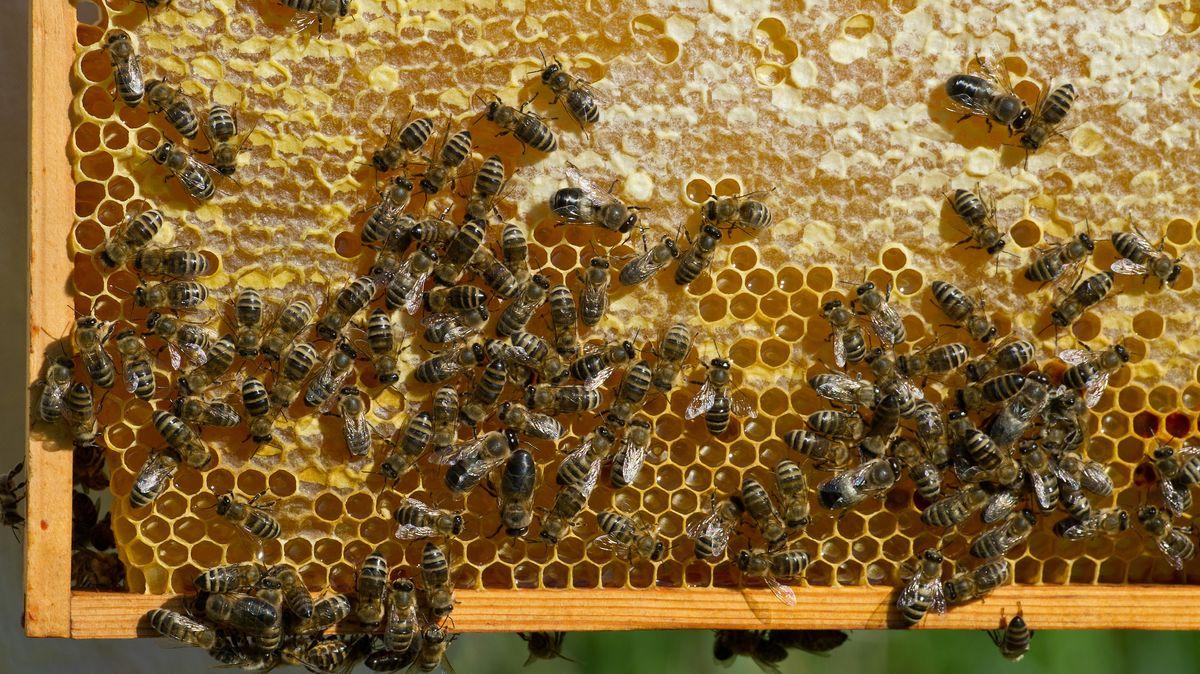 Symbolfoto Bienen