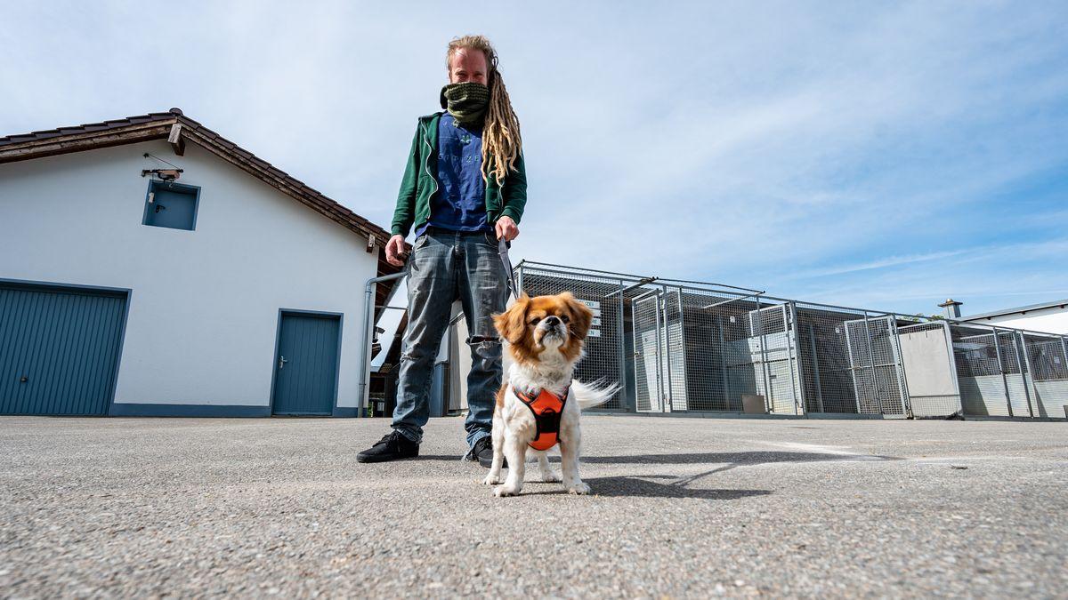 """Ein Mann geht mit Pekinesenmischling """"Charly"""" aus dem Tierheim Straubing spazieren. In zahlreichen Tierheimen in Bayern stehen zurzeit Zwinger und Käfige leer. Seit Beginn der Corona-Krise gibt es eine verstärkte Nachfrage nach Hunden, Katzen oder Kaninchen."""
