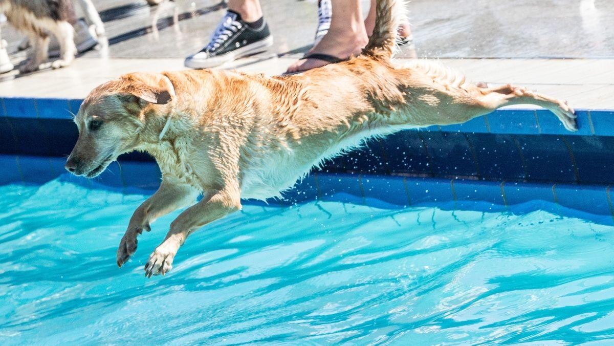 Ab ins Wasser: In Bamberg öffnen zwei Freibäder für Hunde. (Symbolbild)